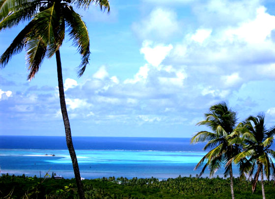 http://www.polukai.com/ocean-blue-palms.jpg